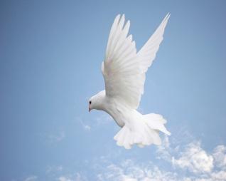 Holy-Spirit-dove-blue-sky